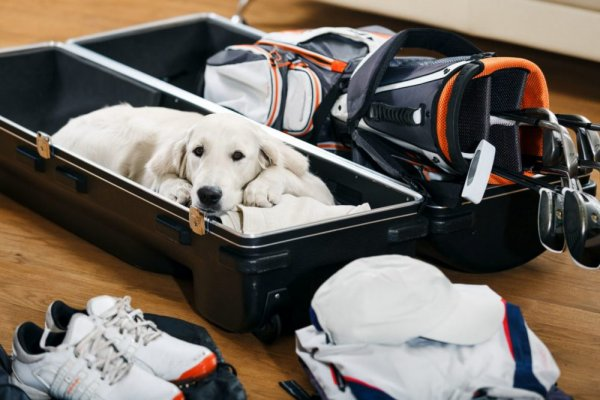 an in-depth review of the best golf travel bags of 2018.